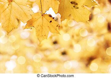 잎, 가을