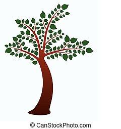 잎, 나무