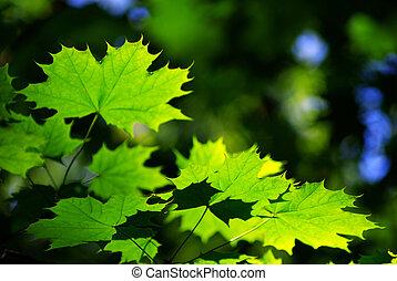 잎, 녹색