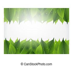 잎, 배경