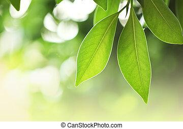 잎, 신선한, 녹색