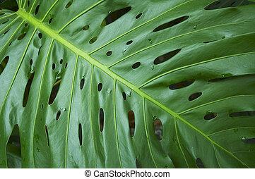 잎, 의, 열대 식물