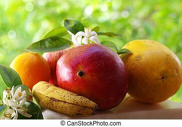 잎, 이국적인 과일, 꽃, ctrus