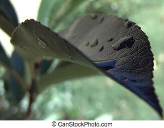 잎, 클로우즈업