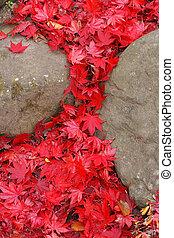 잎, 폭포, 단풍나무