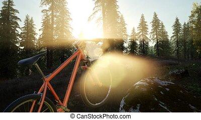 자전거, 에서, 산, 숲, 에, 일몰