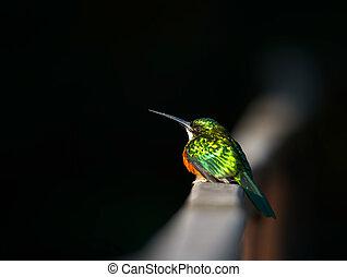 작다, 외래의 새, 브라질, pantanal