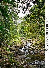 작은 만, 에서, 호주, 숲