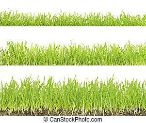 잔디, 고립된, 백색