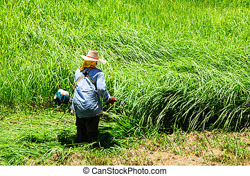 잔디, 노동자, 잔디 깎는 사람, 들판, 절단, 녹색 잔디