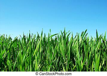 잔디, 녹색