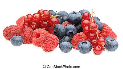 장과, 과일