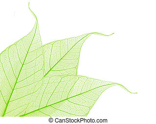 장식적이다, 해골, 잎