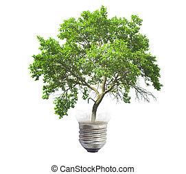 전구, 와, 녹색 나무, 고립된, 백색 위에서, 배경
