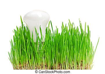 전구, 통하고 있는, 풀, symbolizing, 녹색, 에너지