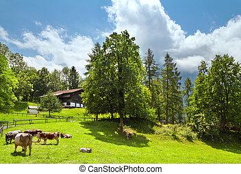 전통적인, 스위스어, 농가