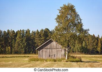 전통적인, 핀란드 말, 멍청한, 농장, 에서, 그만큼, countryside., 핀란드, 조경술을 써서 녹화하다