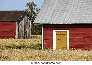 전통적인, 핀란드 말, 빨강, 멍청한, 농장, 시골의