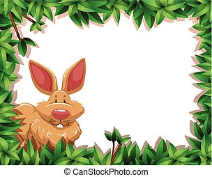 정글, 토끼