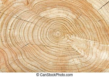 제자리표, 나무, 패턴