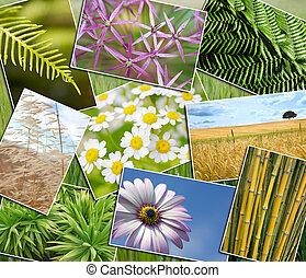 제자리표, 녹색, 환경, 식물, 들판, 꽃, 몽타주