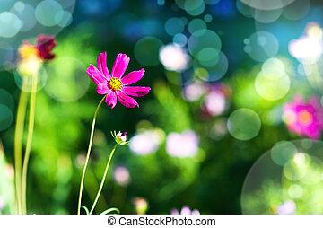 제자리표, 배경, 와, 자주색 꽃