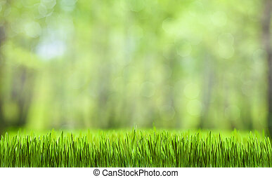 제자리표, 봄, 떼어내다, 녹색의 숲, 배경