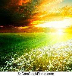 제자리표, hills., 빛, 떼어내다, 배경, 아침, 밝은, 녹색