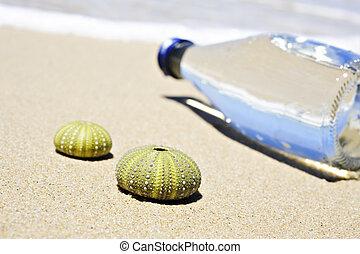 조개, 장난꾸러기, 장면, 죽은 사람, 2, 물병, 바닷가
