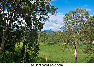 조경술을 써서 녹화하다, 에서, 오스트레일리아 사람, 오지, 에서, 그만큼, 여름