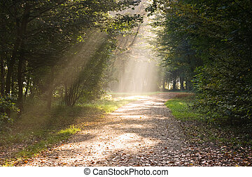 좁은 길, 광선, 햇빛