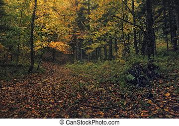 좁은 길, 숲