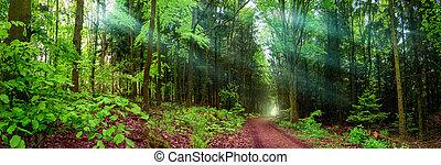 좁은 길, 파노라마, 부드러운 물건, 조경술을 써서 녹화하다, 빛, 숲
