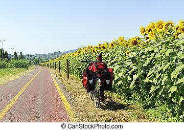차선, 치고는, bicycles, 와..., 해바라기, 에서, tuscany
