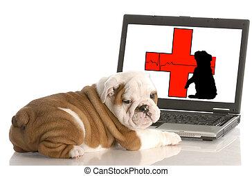 찾는 것, 동물 건강, 정보, 온라인의