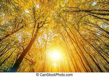 천개, 명란한, 숲
