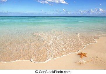청록색의, 캐러비안, 불가사리, 포탄, 열대적인, 모래 바다