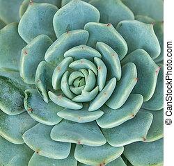 축소형, 흥미 진진한, 식물