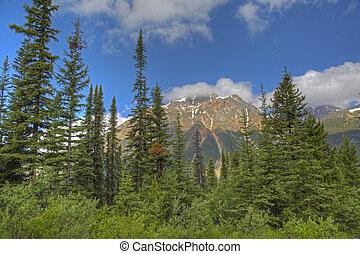 캐나다, 산, 바위가 많은, 한 나라를 상징하는, -, 공원, 숲, boreal, 벽옥