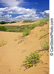캐나다, 조경술을 써서 녹화하다, 사막, 매니토바