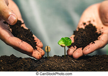 커피, 실생 식물, 에서, 자연, 식물, a, 나무, 개념, 손