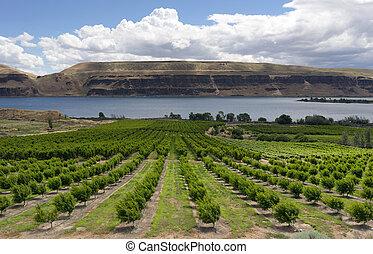 컬럼비아, 은 수비를 맡는다, 나무, 과일, 농부, 과수원, 협곡, 강