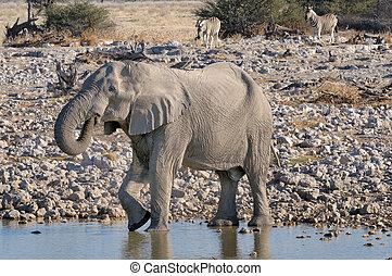 코끼리, 와..., 얼룩말