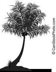 코코넛 나무