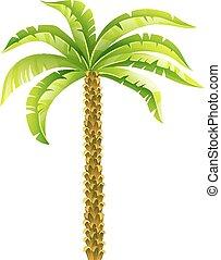 코코넛, eps10, illustration., 잎, 나무, 고립된, 열대적인, 벡터, 녹색의 배경, 손바닥, 백색