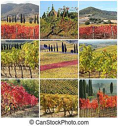 콜라주, 와, 기이한, 가을 색깔, 의, 포도 동산, 에서, 이탈리아