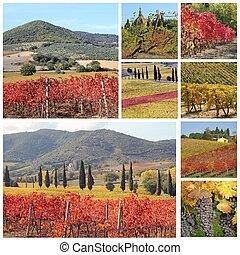 콜라주, 와, 기이한, 조경술을 써서 녹화하다, 의, tuscan, 포도 동산, 에서, 가을