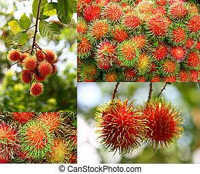 콜라주, 의, 람부탄, 과일