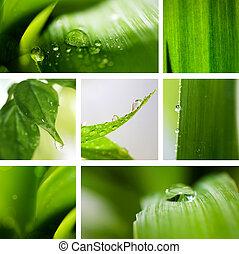 콜라주, 자연, 녹색, 배경.