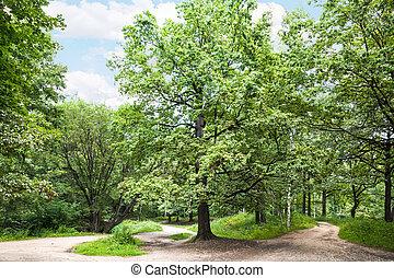 크게, 오크 나무, park에게서, 통하고 있는, 명란한, 여름의 날